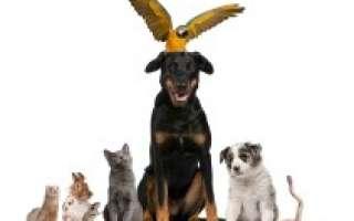 I Fiori di Bach e gli animali